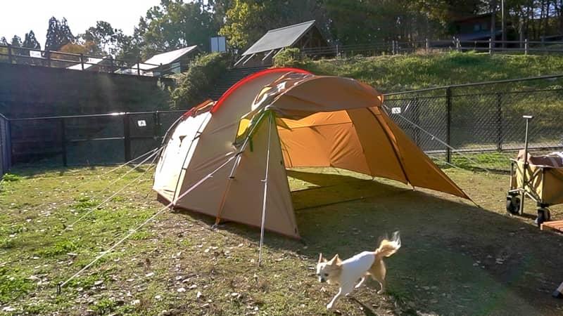 テントと犬