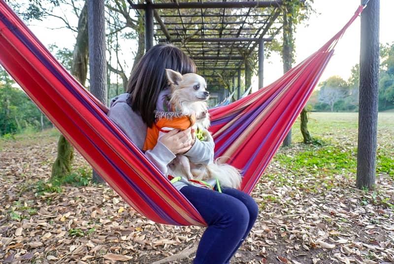 ハンモックに乗る人と犬