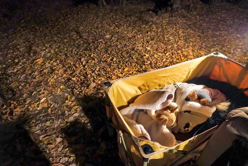 アウトドアワゴンの中で温まる犬