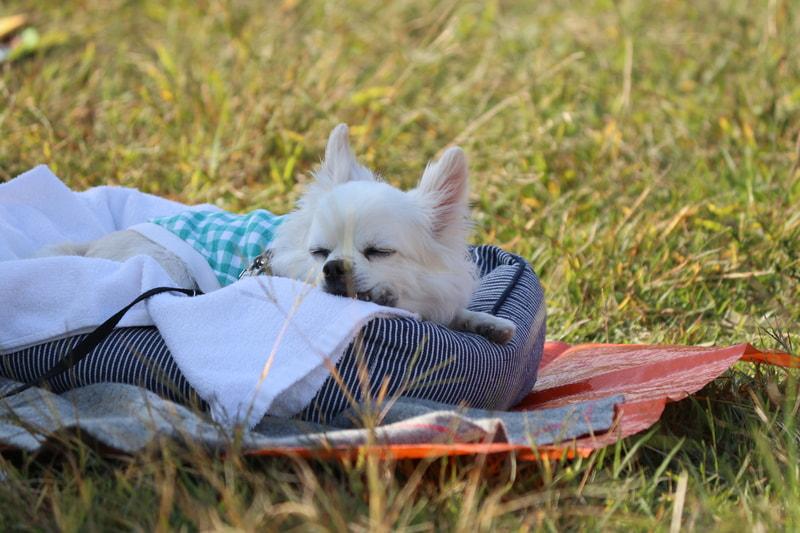 キャンプ場の犬