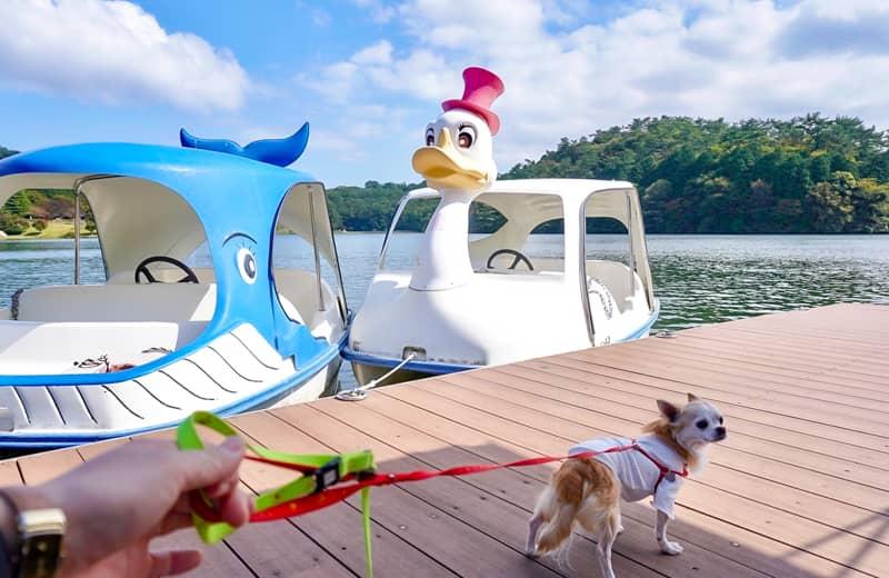 スワンボートと桟橋の犬