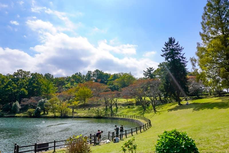 左側に湖と右側に芝生と木の写真
