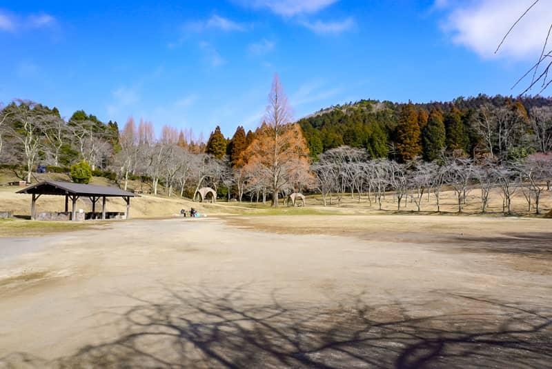 広いフリーサイトと遠くに見える1本の大きな木