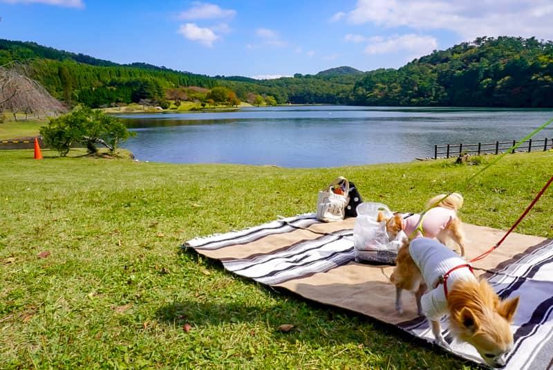 志高湖で犬とピクニックの様子
