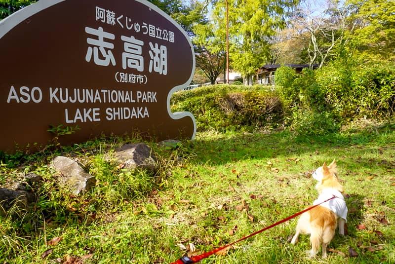 志高湖の看板と犬