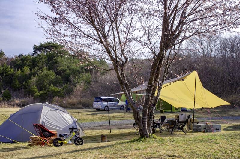 春のキャンプは楽しみだらけ