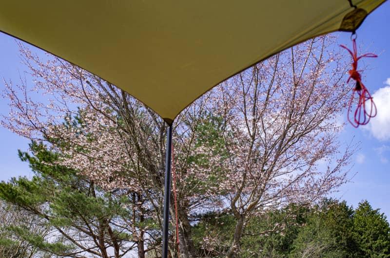 春キャンプの楽しみ方