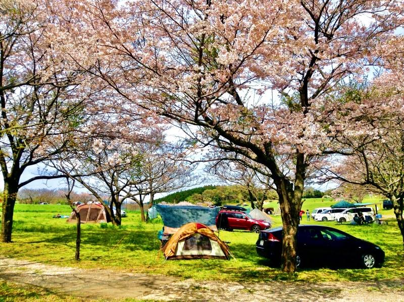 春のキャンプシーズンが一番盛り上がる!春キャンプの魅力と楽しみ方を紹介