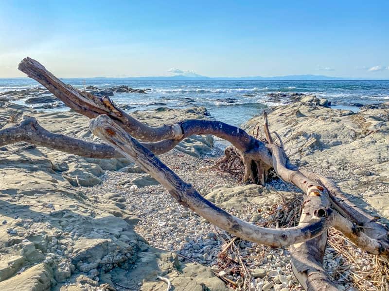 海岸に流れ着いた流木