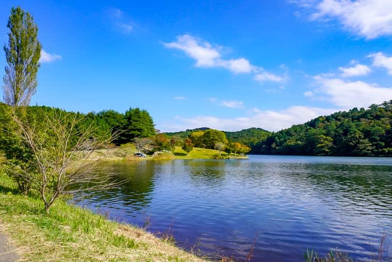 緑の芝生と湖