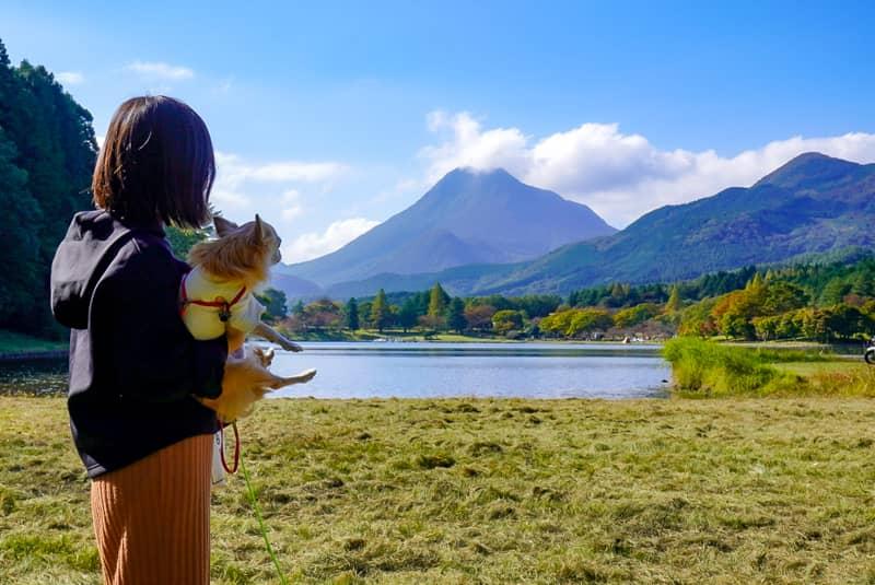 遠くの山を眺める人と犬
