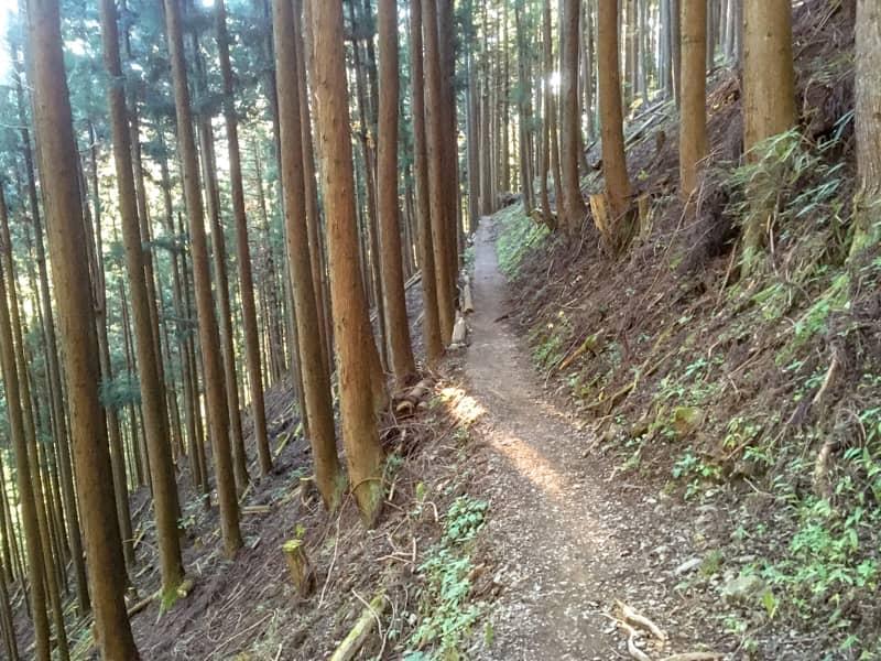 雲取山に登り始めてすぐの道