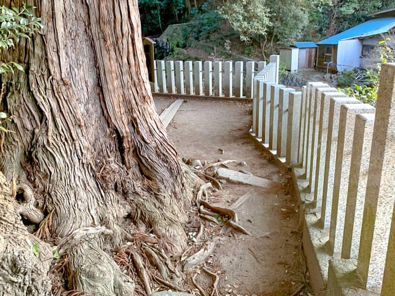 2.杉の木の脇をすり抜けて外に出ます