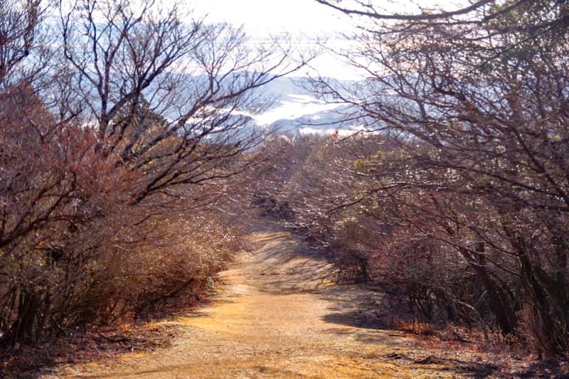 4月中旬あたりからは稜線の両脇に豆桜