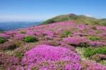 6月は天空の絶景「ミヤマキリシマ」を見に、くじゅうに登ろう!
