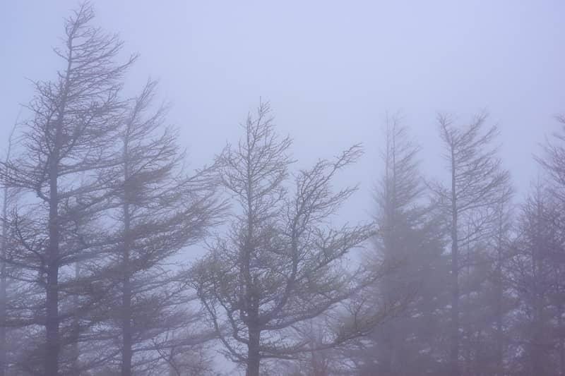 この日は本当に霧が凄く