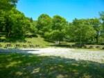 兵庫県のグリーンパークハチ北キャンプ場で自然いっぱいの森林浴キャンプレビュー
