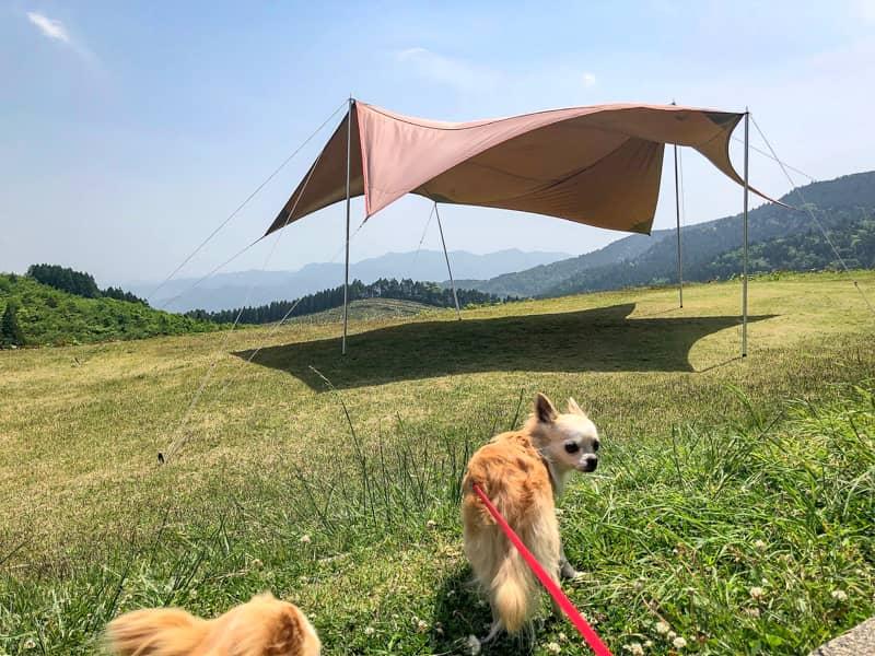 スノーピークのタープ、メーヴェと犬