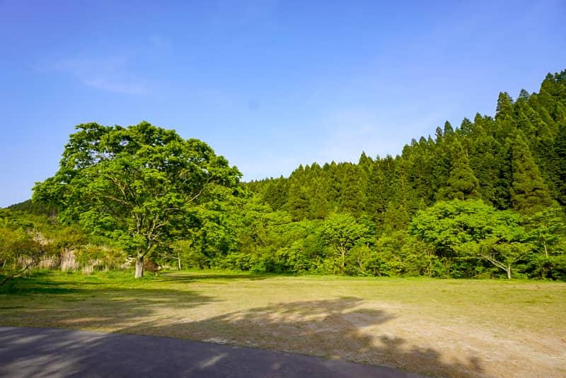 フリーオートサイトの奥、大きな木がある