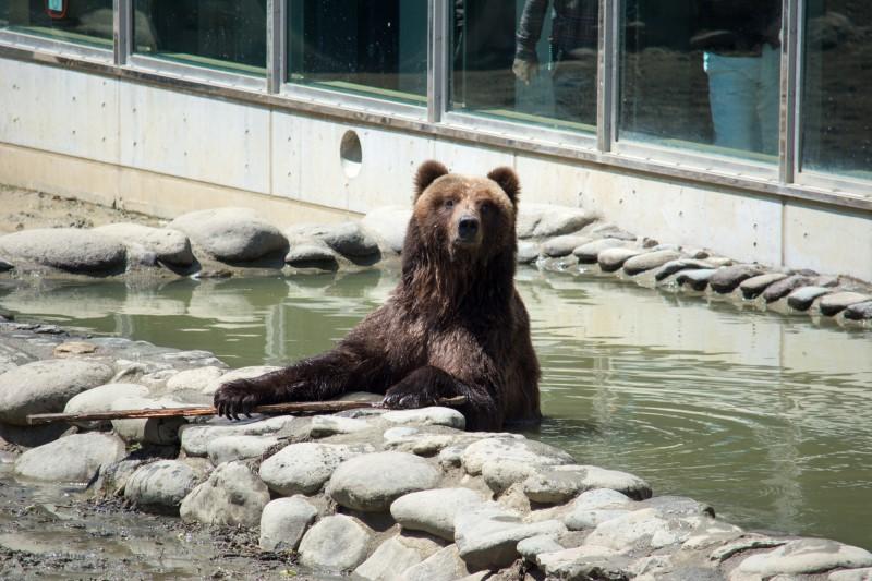 動物園の熊