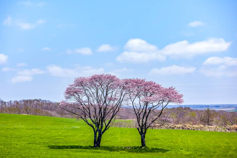 北海道の春キャンプシーズン