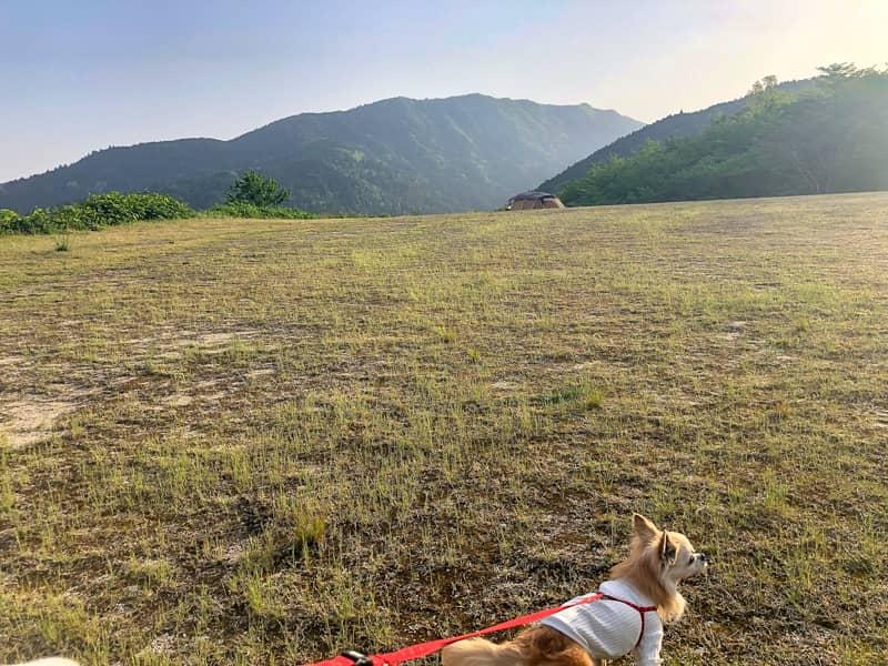犬と遠くに見えるエルフィールド