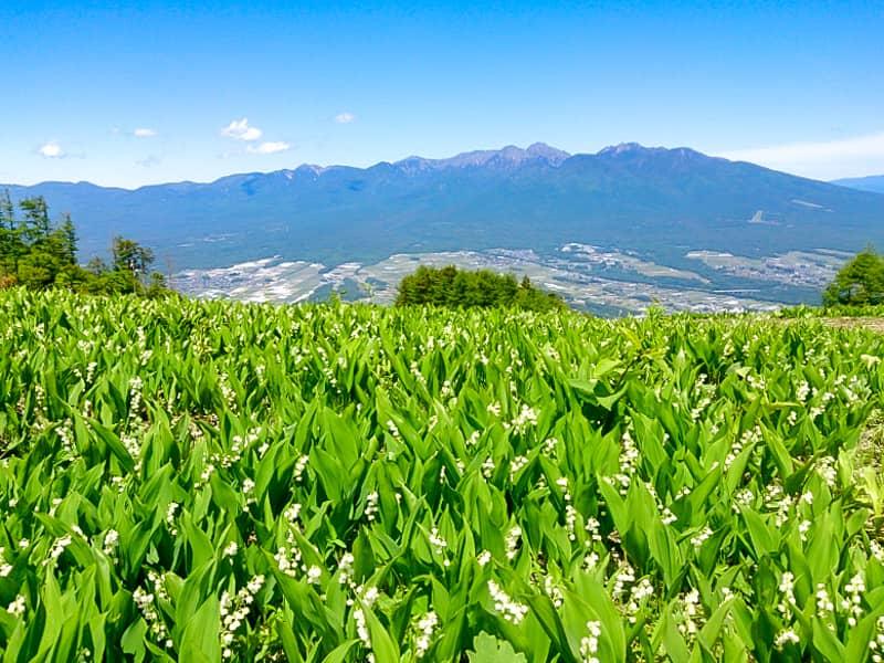 花の宝庫「入笠山」