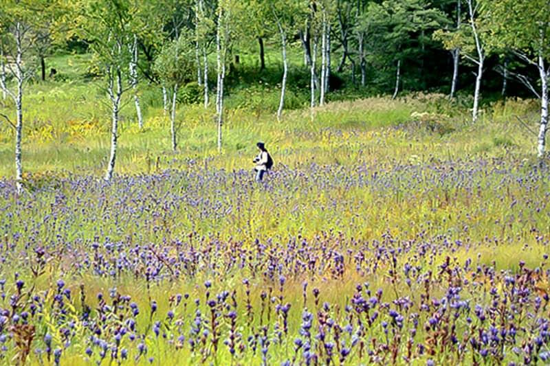 花の宝庫として知られる「天空の花園」
