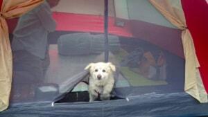 兵庫県にある「キャンプリゾート森のひととき」で我が家の愛犬キャンプデビュー!