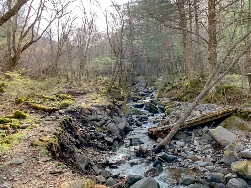 小沢という沢に沿って緩やかな登山道を進みます