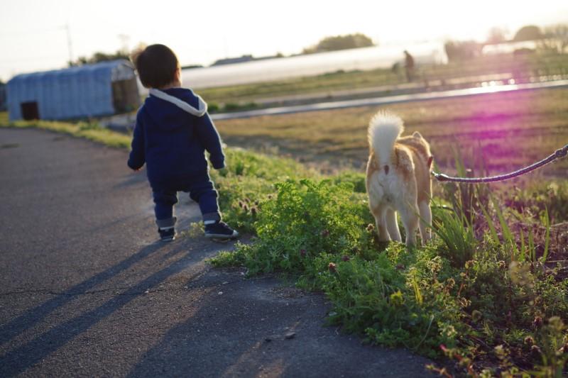 田舎で散歩するイメージ