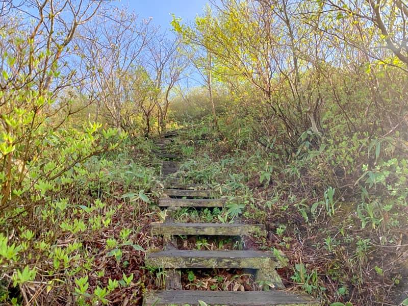 階段は段々と本格的な木の階段に