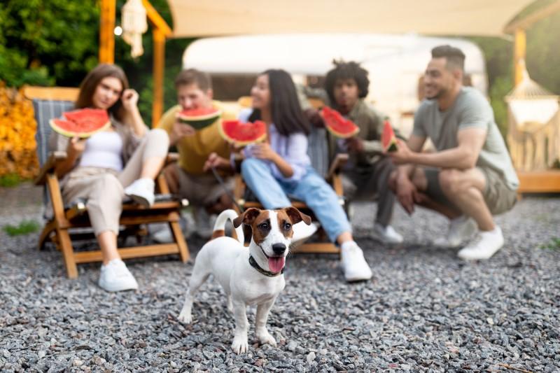 ノーリードOKの犬連れキャンプ