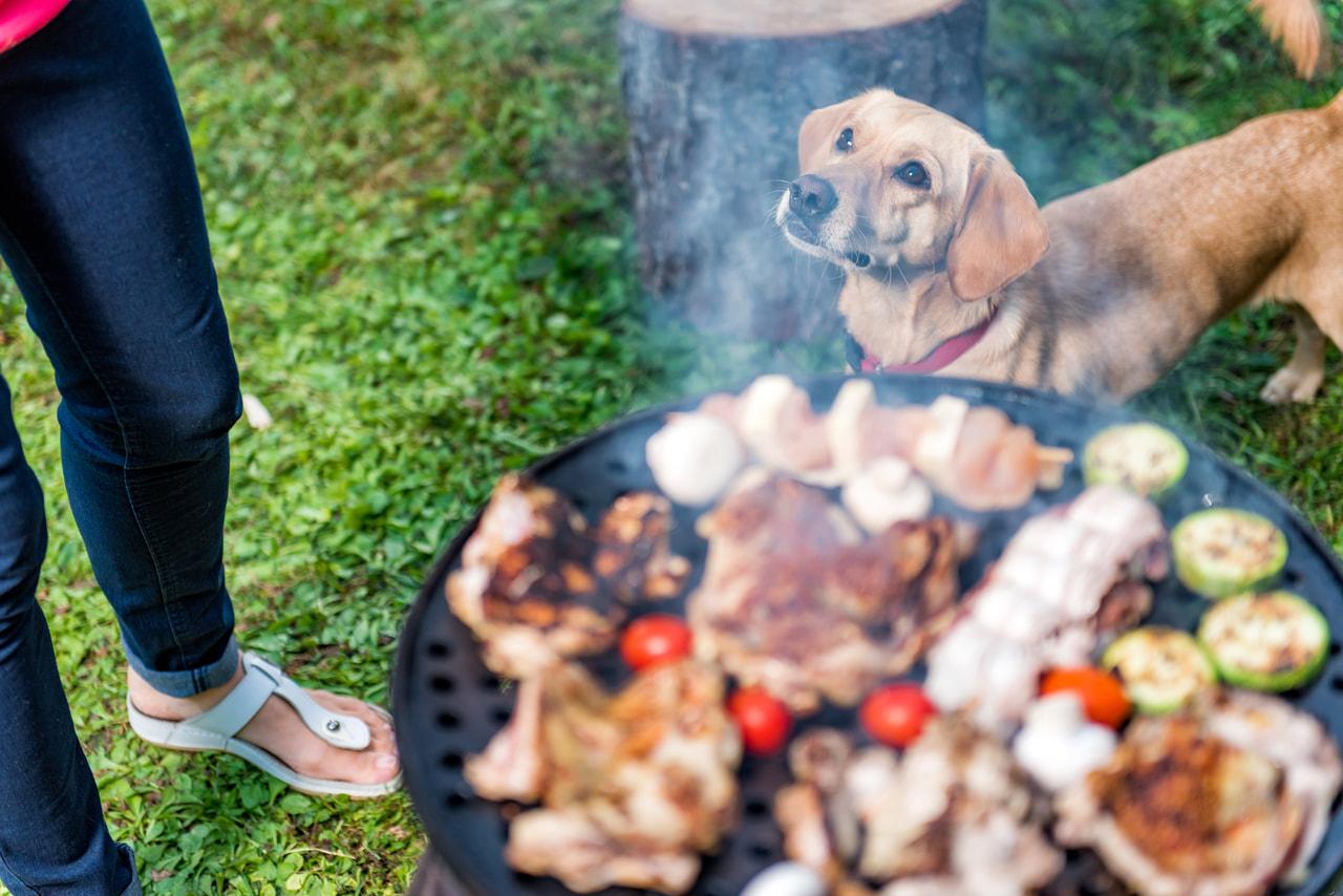 伊豆修善寺に10月31日まで限定で愛犬と泊まれるグランピングテントがオープン