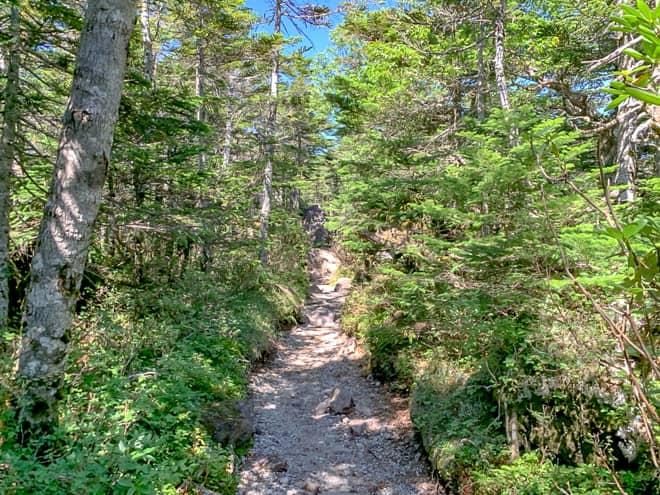三ツ岳分岐からは暫く平坦な歩きやすい山道が続きます