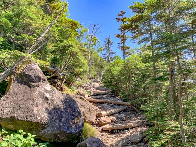 樹林帯であっても時より景色が開けたりする面白い山