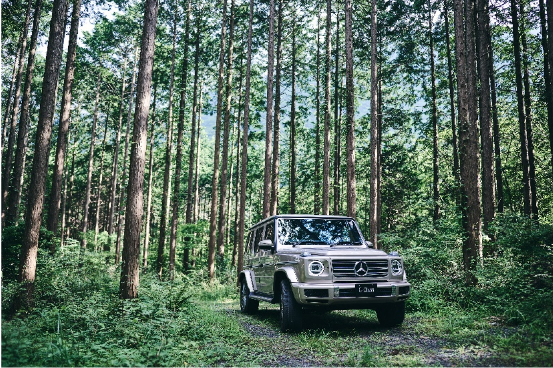 Mercedes me Forest (9)