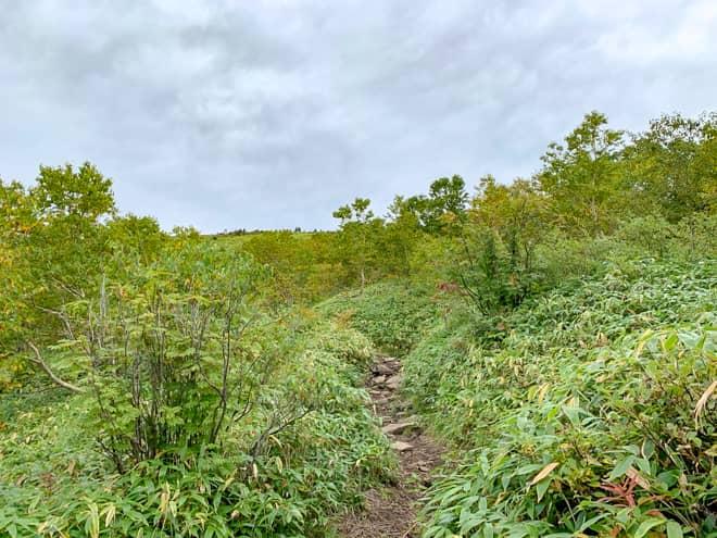 やっと森林限界を迎えそうで景色が開けて山肌が見えてきました