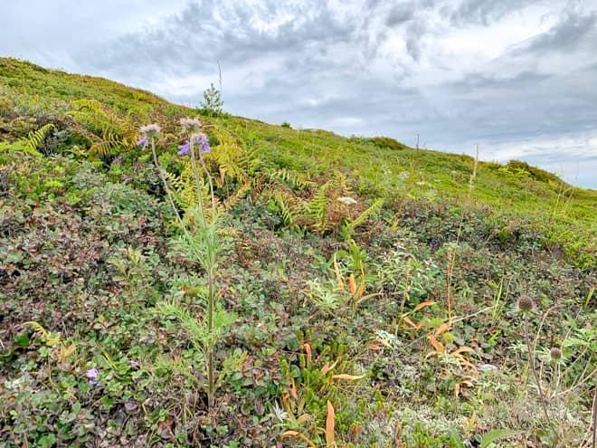 山頂付近でも色とりどりの花が咲いています
