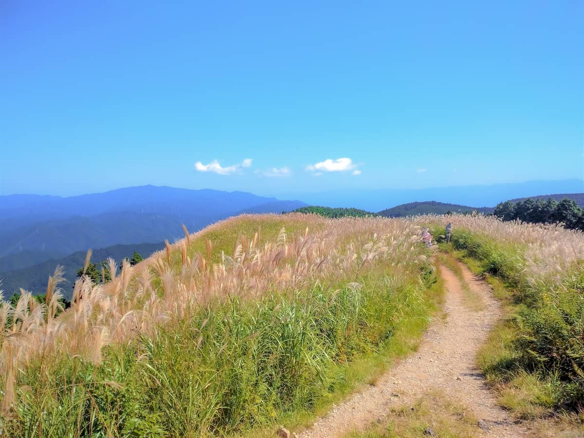 秋を感じる山旅へ!花ススキが美しい「岩湧山」を登山レポートします!