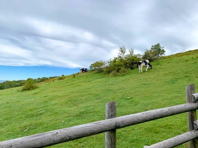 左手に広がる広大な牧場には牛が沢山放し飼いされています