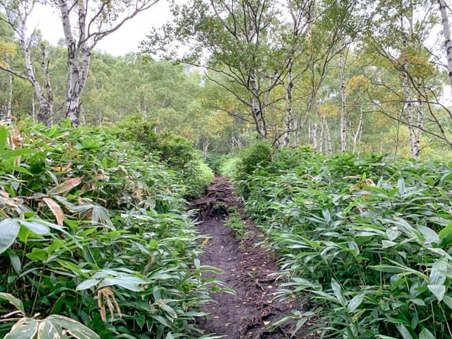 樹林帯からが本格的な登山道といった雰囲気になります