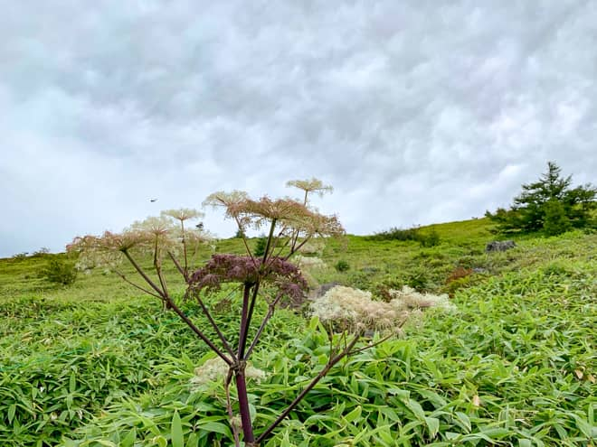 沢山の高山植物を見ることが出来る花の百名山