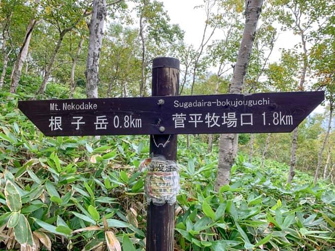 40分ほど歩くと、1つ目の標識が見えます