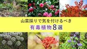 山菜採りで気をつけるべき毒草一覧|有毒植物の見分け方