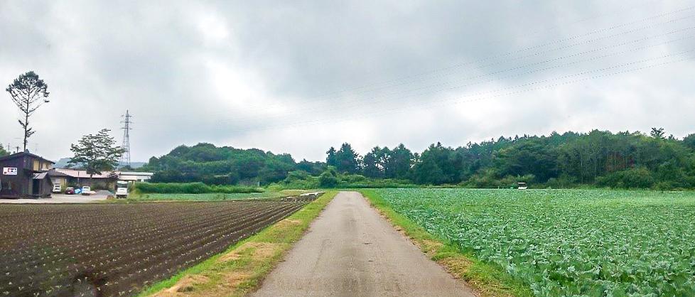 /KARUIZAWA-CAMP-GOLD近くのキャベツ畑