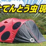 インパクト抜群で可愛いてんとう虫テントが誕生!?キャンプ場で注目の的間違いなし!!
